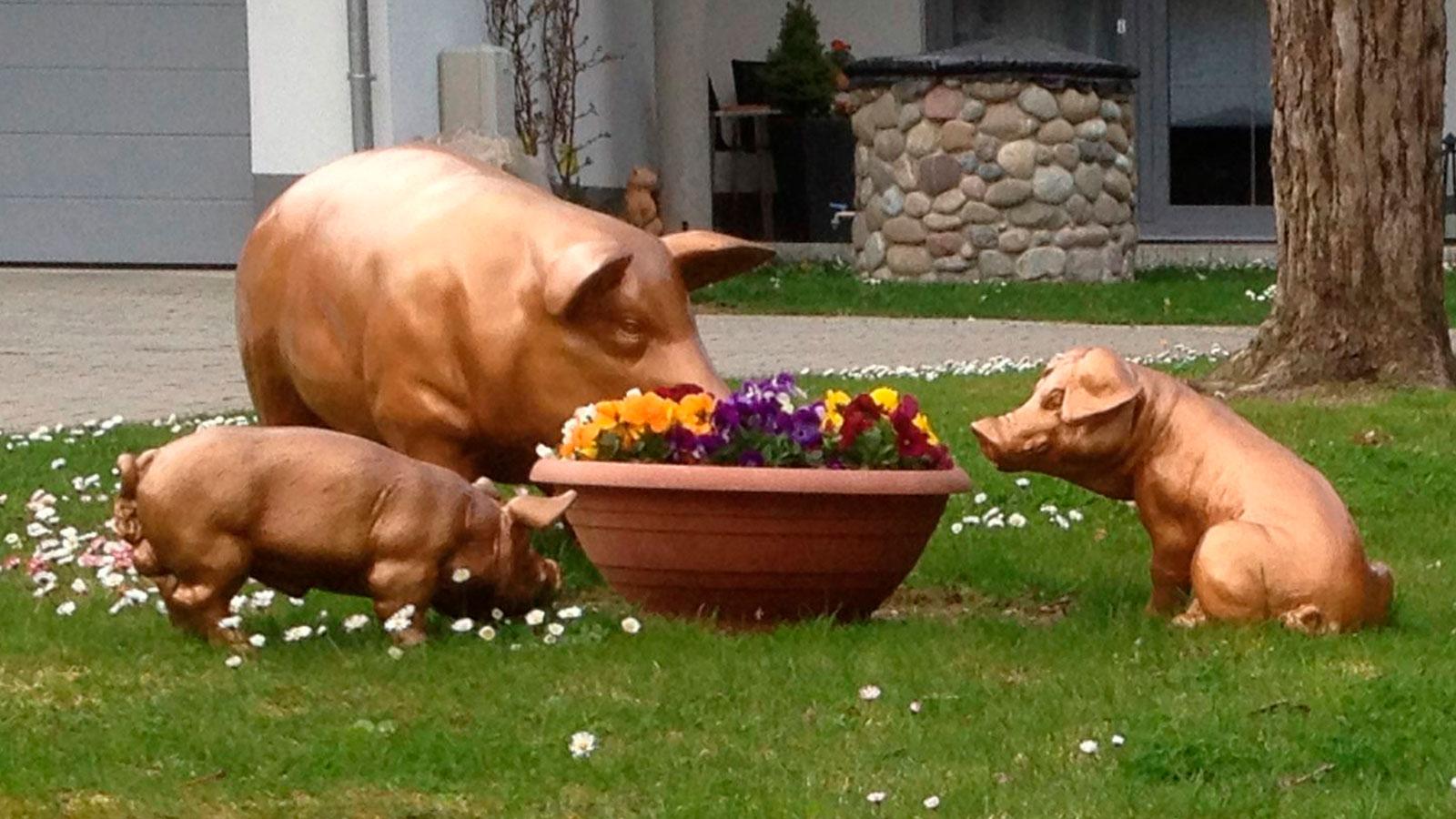 Gücksschweine
